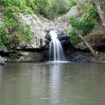 Kondalilla Falls Walk, a great Sunshine Coast Walk