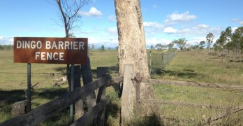 Next up was the drive to Jandowae to see the Dingo Fence