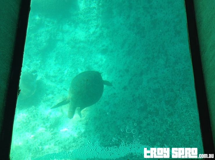 View from Glass Bottom Boat on Lady Musgrave Island Great Barrier Reef
