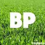 What does BP mean in Rugby Union Football
