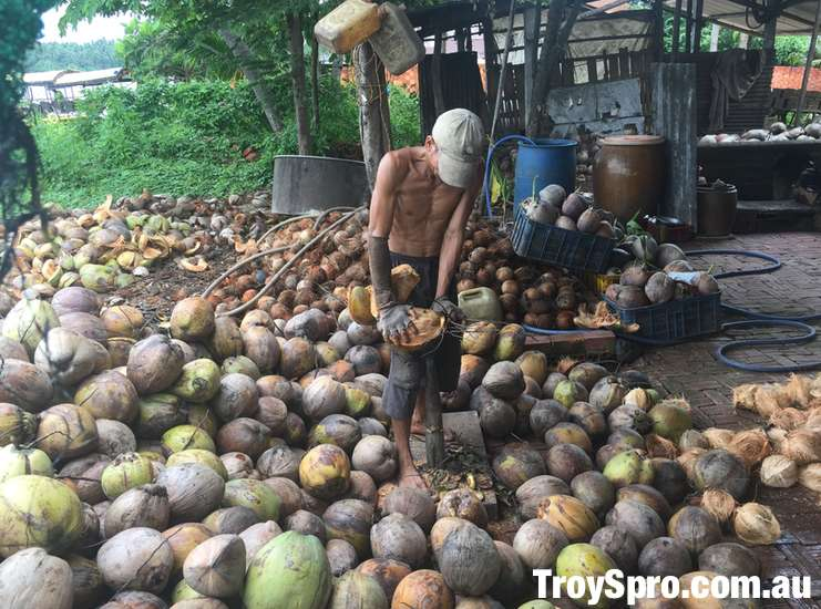Coconut Processing Factory Mekong Delta Tour Ben Tre Vietnam