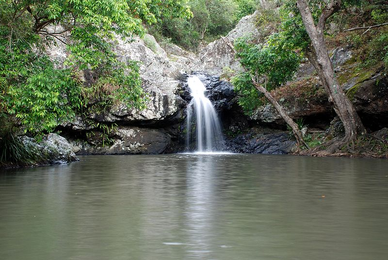 Kondalilla Falls Walk, a Sunshine Coast Walk