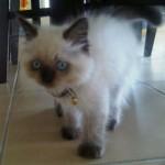 Sasha, R.I.P the Family Cat 19-11-12