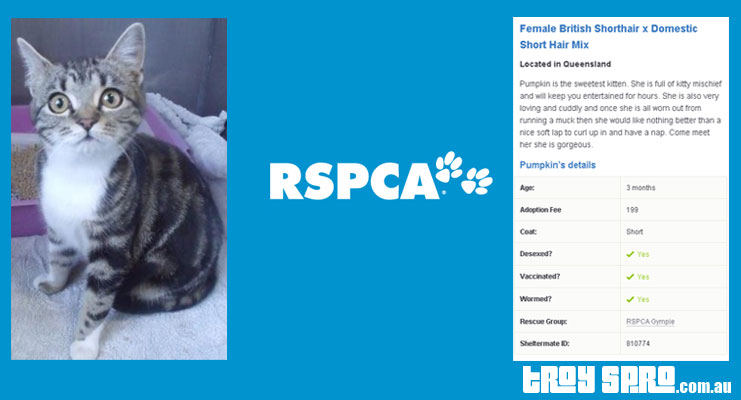RSPCA Adopt a Pet Kitten, Cat, Puppy or Dog