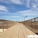 Roma Saleyards Cattle Sales