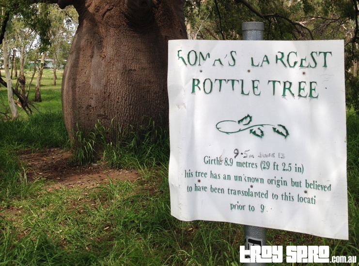 Romas Largest Bottle Tree Queensland